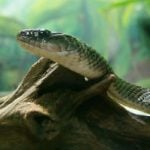 Court rules in favour of man and his snakes