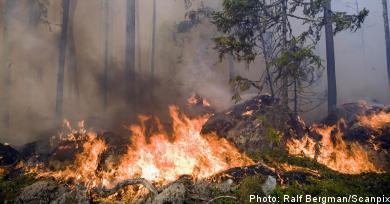 Forest fire 'out of control'