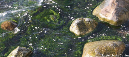 More funding for Sweden's marine environments