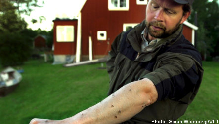 Sweden takes up annual mosquito battle