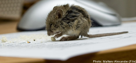 Jilted hubby exacts mousy revenge