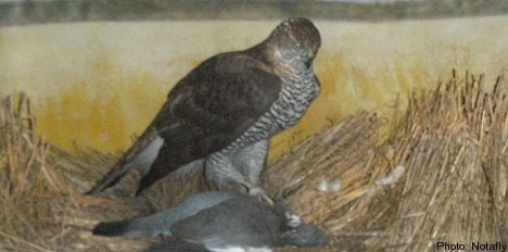 Sale of old stuffed bird goes to Supreme Court