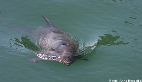 Scientists to count Baltic Sea porpoises