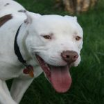 Minister proposes ban on fighting dogs