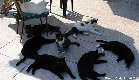 Swedish family lived with 191 cats