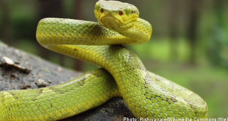 Woman held captive with poisonous snakes