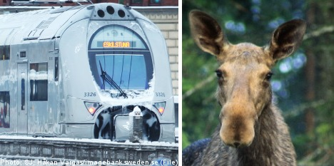 Train-elk collision ends in a stalemate