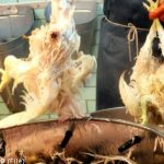 Chickens 'tortured' during slaughter: report