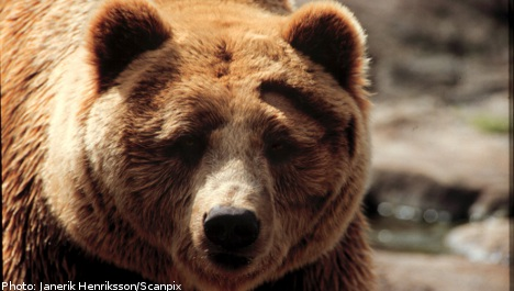 Hunters bait bears with bloodied bedding for constipation death