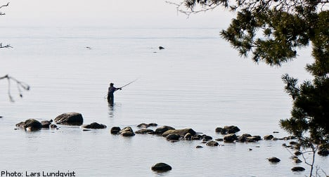 Baltic fish stocks in mystery decline