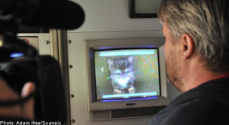 Kitty catapulted to Swedish celebrity after drainpipe drama