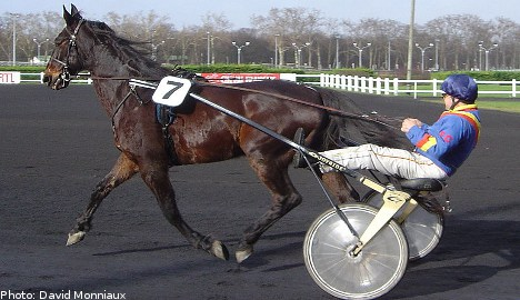 Trotting - Sweden's 'third way' on a racetrack