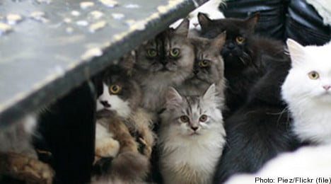 Swedish couple fined for neglecting their 53 cats