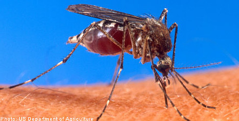 Helicopters to bomb Swedish mosquitoes