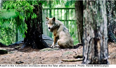 Zoo cuts off contact with wolves after fatal attack