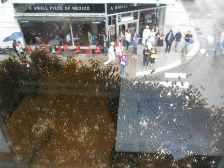 The place to bee!<br>Spectators kept watch, from a safe distancePhoto: Judith Thomas