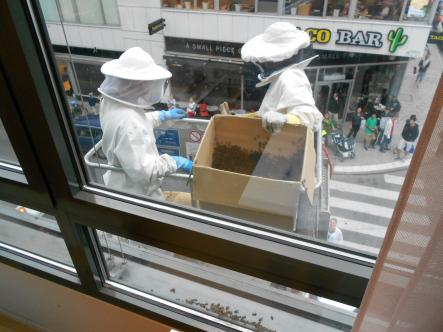 Hauling off the catch<br>The experts filled the bees into two cardboard boxes and were off! Another Friday the 13th saved!Photo: Judith Thomas