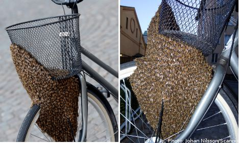 Swarm of homeless bees claims woman's bike