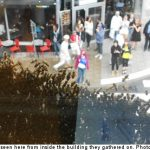 Stockholm plagued by giant swarm of bees