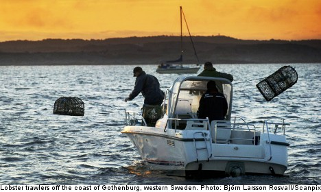 Swedes hail opening of lobster fishing season