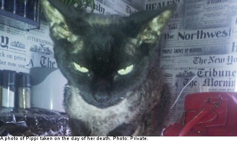 Outrage after cat's ashes dumped in 'mass grave'