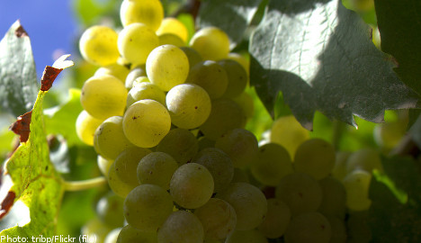 'Catastrophic' year for Swedish wineries