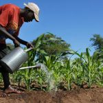 Africa in focus for university's agricultural mission