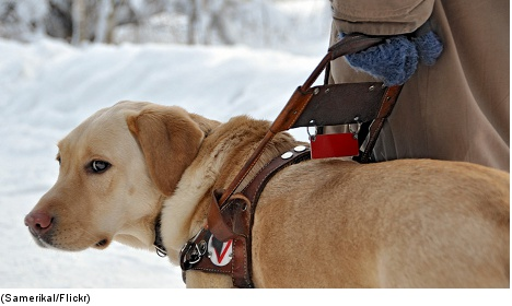 Guide dog not a hot ticket to disability bash