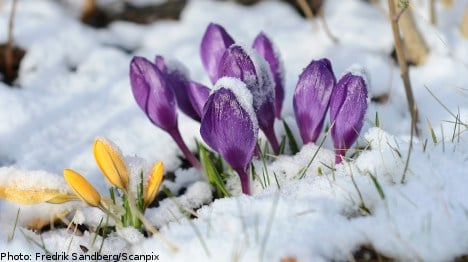 Six tell-tale signs of spring in Sweden