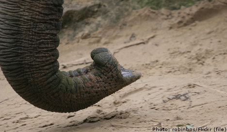 Elephant escapes circus and rams family home