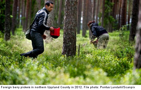 Buyers to monitor well-being of berry pickers