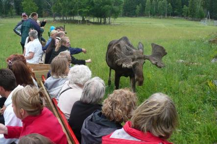 Visitors get close during the Moose SafariPhoto: Oliver Gee