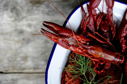 """To the crayfish claw<br>Some of the songs are pure odes to the crayfish. Take """"Till kräftklon"""" or """"To the crayfish claw"""". The best lyrics: """"With a claw that's so good, and a pearl, yes, yes, all you gotta do, yes all you gotta do - is eat it."""" It sounds better in Swedish, we promise. Photo: Erik Mårtensson/Scanpix (file)"""