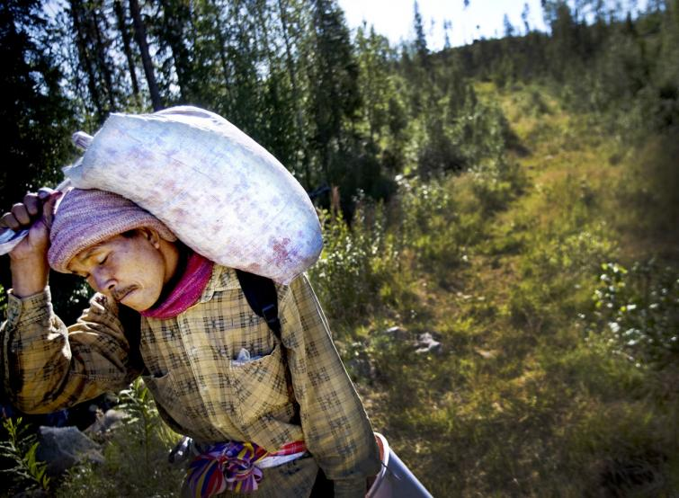 Foreign workers picking berries in Sweden's wilderness
