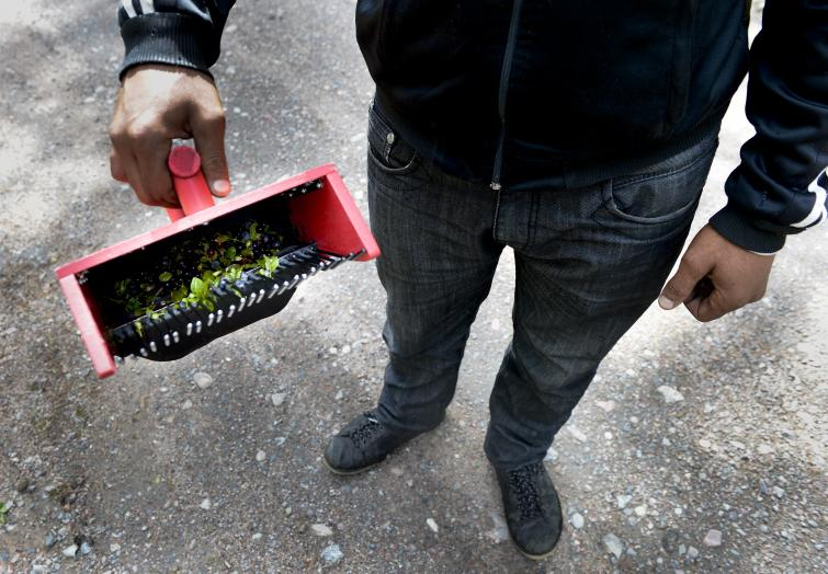 Blueberry scoop<br>A worker uses a traditional blueberry scoop while out in the forestPhoto: Pontus Lundahl/Scanpix