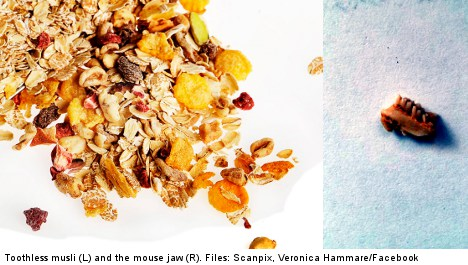 Swede finds mouse teeth in morning muesli