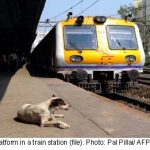 'Delusional' man stops train to fetch dog