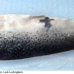 Man finds 'Jesus fish' in Sweden: a sign from God