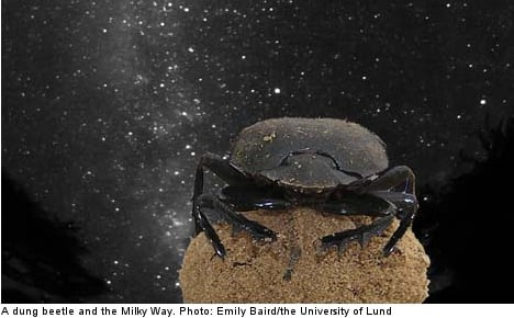 Swedes claim US parody prize for dung beetle find