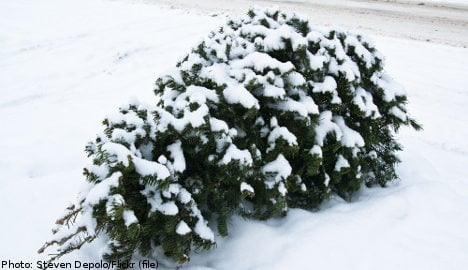 One in five Swedish Xmas trees are stolen