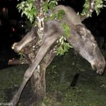 """Are Swedes... awesome?<br><br> You know it's an awesome country when Google finishes your sentence by saying it's awesome. Is it the <a href=""""http://www.thelocal.se/20110907/"""" target=""""_blank"""">awesome elk stuck in a tree</a>? Or the awesome woman with the world's <a href=""""http://www.thelocal.se/20080331/"""" target=""""_blank"""">fastest internet connection</a>? Maybe it's just that this site is spreading the word and the world is listening. Who knows. But it's awesome. But there's more..."""