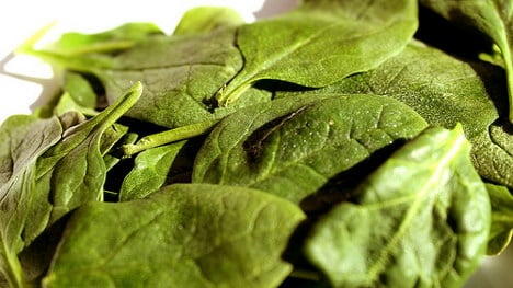 Spinach extract could be key to reducing obesity