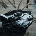 One of Banksy's famous rats pictured in Toronto, Canada. Photo: Nathan Denette/AP
