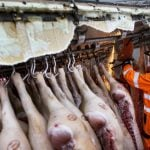 Authorities work to remove the pigs from the truck.Photo: Kicki Nilsson/TT