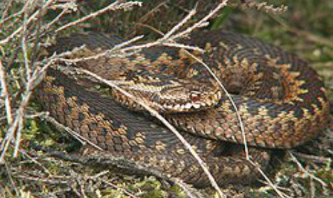 Snake hunt after man claims playground bite