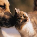 More Swedes prefer dogs to cats: study