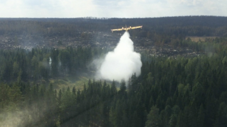 Swedish forest fire set to flare up again
