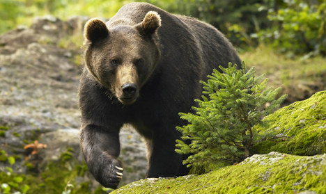 Swedish woman attacked by bear