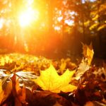 'Store up your sunlight hours before winter'