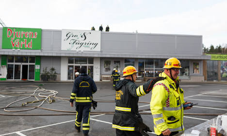 Animals dead after pet store catches fire